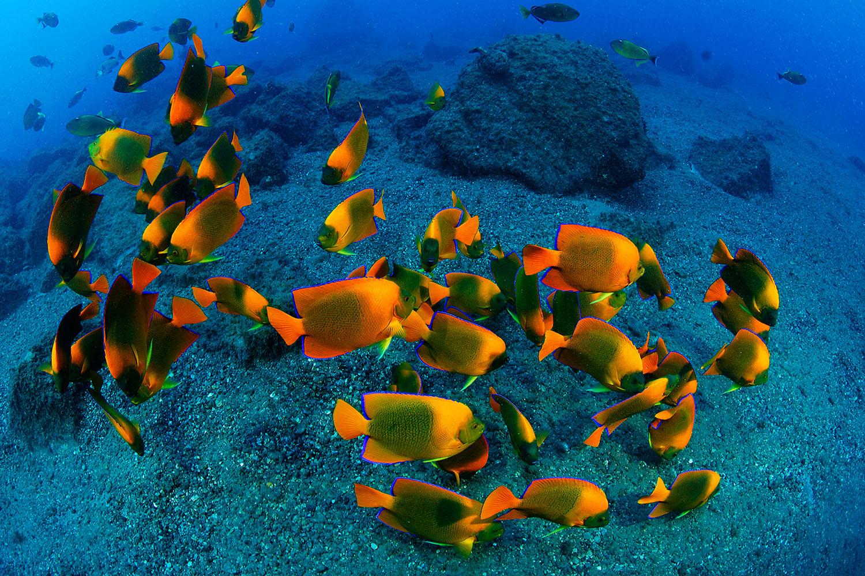 Fischschwarm in Socorro