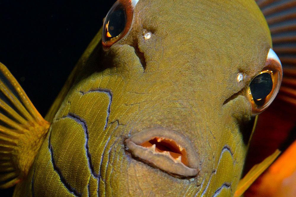 Riff Fisch in Socorro